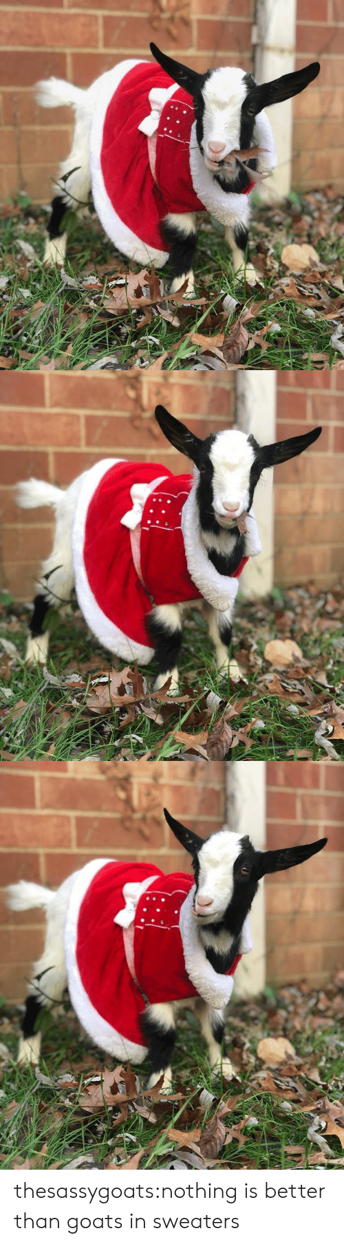 Target, Tumblr, and Blog: thesassygoats:nothing is better than goats in sweaters