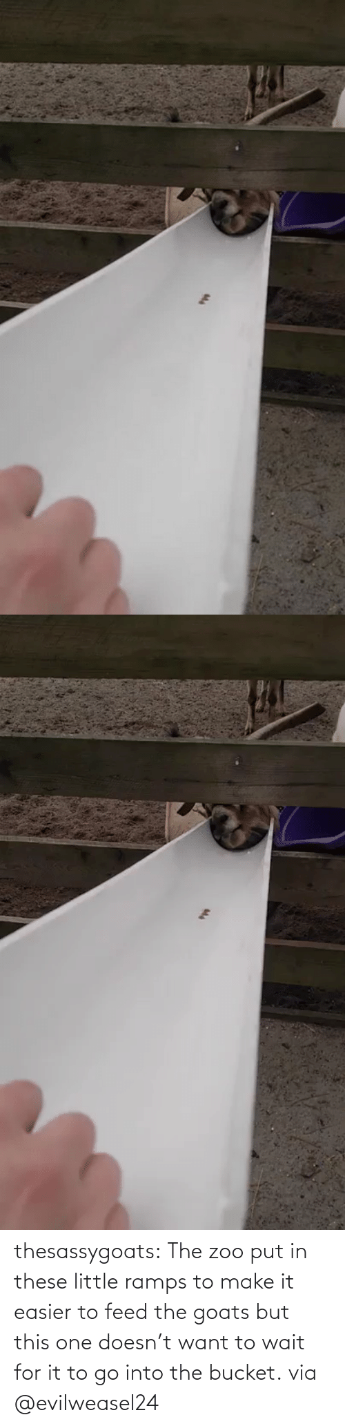 Target: thesassygoats: The zoo put in these little ramps to make it easier to feed the goats but this one doesn't want to wait for it to go into the bucket. via @evilweasel24