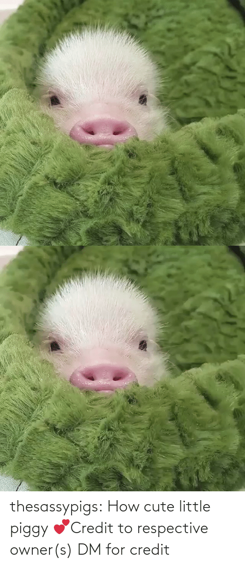 Cute Little: thesassypigs:  How cute little piggy 💕Credit to respective owner(s) DM for credit