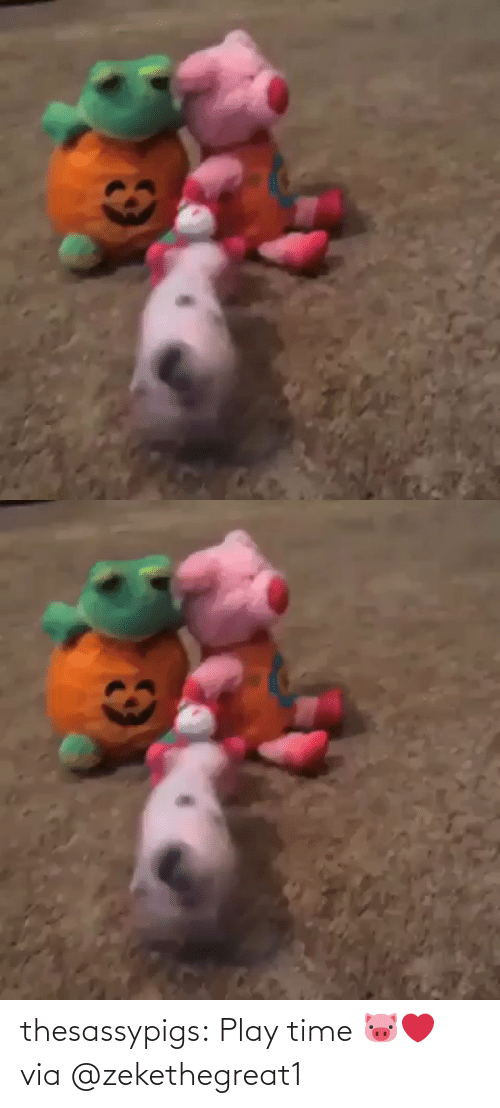 Blank: thesassypigs: Play time 🐷❤️ via @zekethegreat1