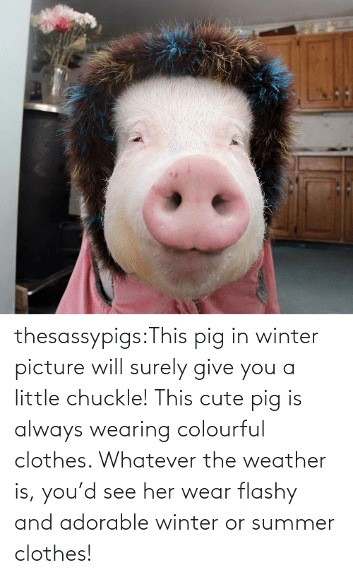 Wearing: thesassypigs:This pig in winter picture will surely give you a little chuckle! This cute pig is always wearing colourful clothes. Whatever the weather is, you'd see her wear flashy and adorable winter or summer clothes!