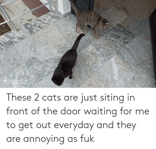 The Door: These 2 cats are just siting in front of the door waiting for me to get out everyday and they are annoying as fuk