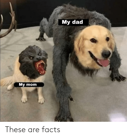 Facts: These are facts