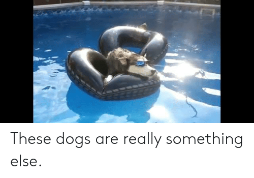 Dank, Dogs, and Something Else: These dogs are really something else.