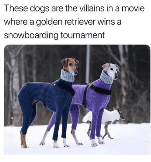 Dogs, Golden Retriever, and Movie: These dogs are the villains in a movie  where a golden retriever wins a  snowboarding tournament