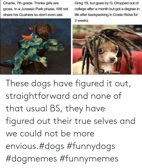 funnymemes: These dogs have figured it out, straightforward and none of that usual BS, they have figured out their true selves and we could not be more envious.#dogs #funnydogs #dogmemes #funnymemes