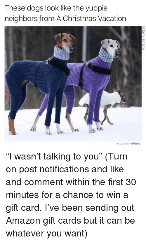 """Amazon, Christmas, and Dogs: These dogs look like the yuppie  neighbors from A Christmas Vacation  MADE WITH MOMUS """"I wasn't talking to you"""" (Turn on post notifications and like and comment within the first 30 minutes for a chance to win a gift card. I've been sending out Amazon gift cards but it can be whatever you want)"""