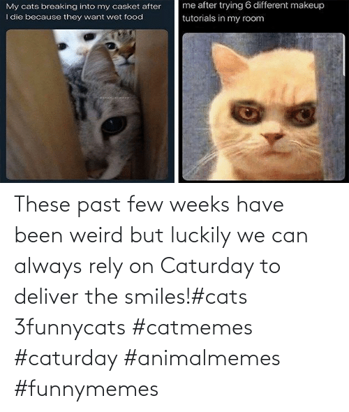 deliver: These past few weeks have been weird but luckily we can always rely on Caturday to deliver the smiles!#cats 3funnycats #catmemes #caturday #animalmemes #funnymemes