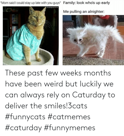 weird: These past few weeks months have been weird but luckily we can always rely on Caturday to deliver the smiles!3cats #funnycats #catmemes #caturday #funnymemes