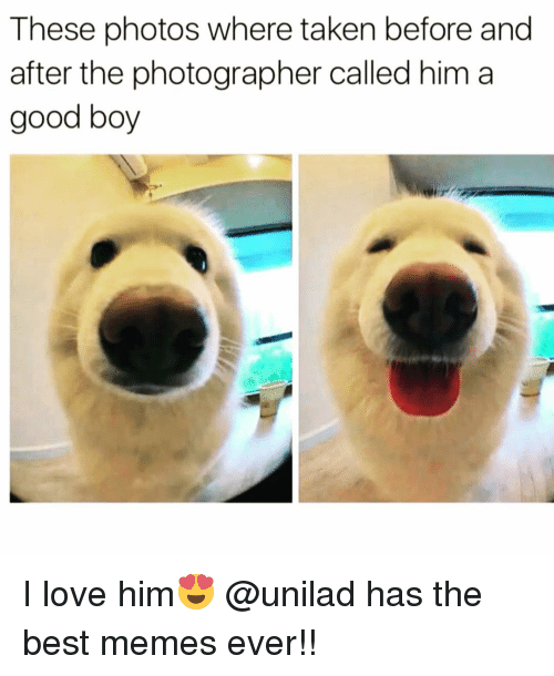 boys i love: These photos where taken before and  after the photographer called him a  good boy I love him😍 @unilad has the best memes ever!!