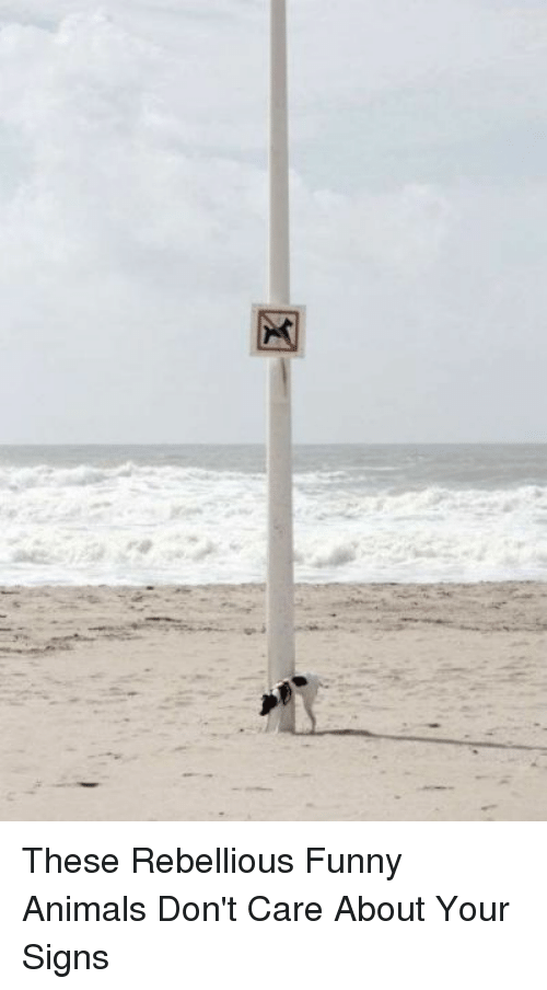 Rebellious: These Rebellious Funny Animals Don't Care About Your Signs