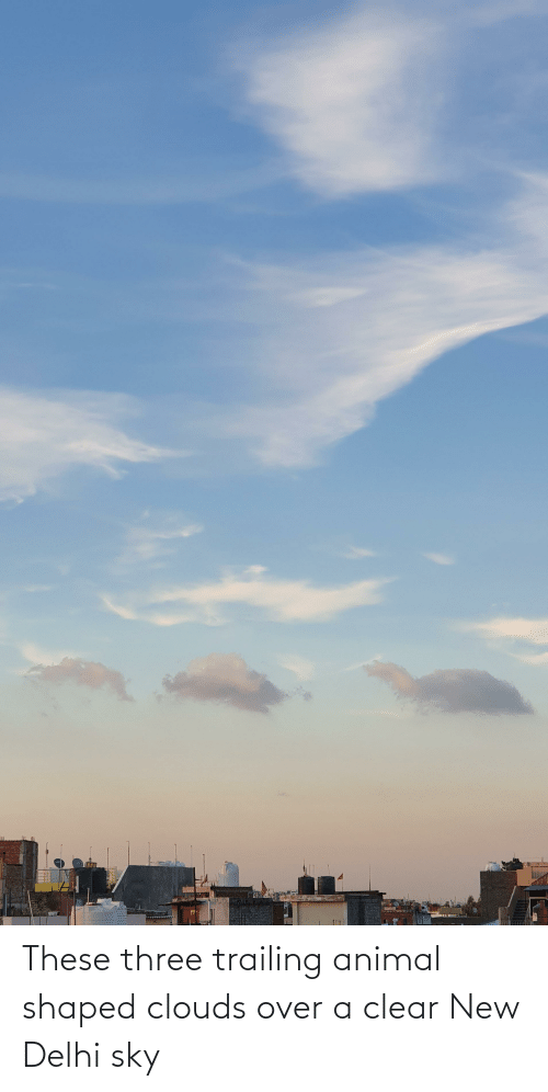 Trailing: These three trailing animal shaped clouds over a clear New Delhi sky