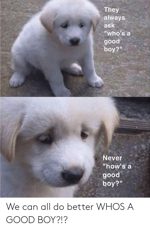 """Good, Never, and Boy: They  always  ask  """"who's a  good  boy?""""  Never  """"how's a  good  boy?""""  21 We can all do better WHOS A GOOD BOY?!?"""