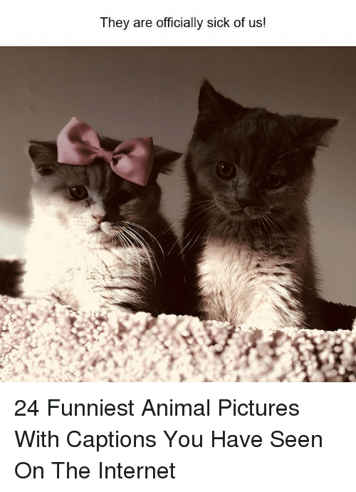 Funniest Animal: They are officially sick of us! 24 Funniest Animal Pictures With Captions You Have Seen On The Internet