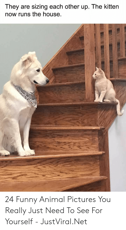 funny animal: They are sizing each other up. The kitten  now runs the house 24 Funny Animal Pictures You Really Just Need To See For Yourself - JustViral.Net