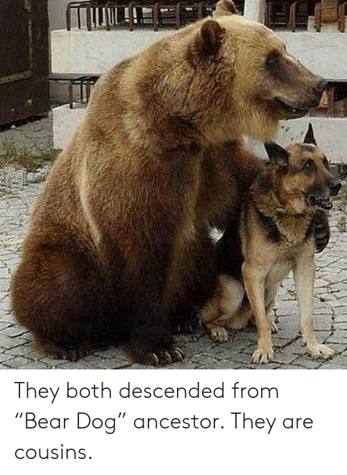 "cousins: They both descended from ""Bear Dog"" ancestor. They are cousins."