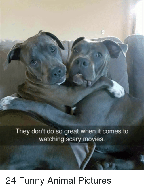 Funny, Movies, and Animal: They don't do so great when it comes to  watching scary movies. 24 Funny Animal Pictures