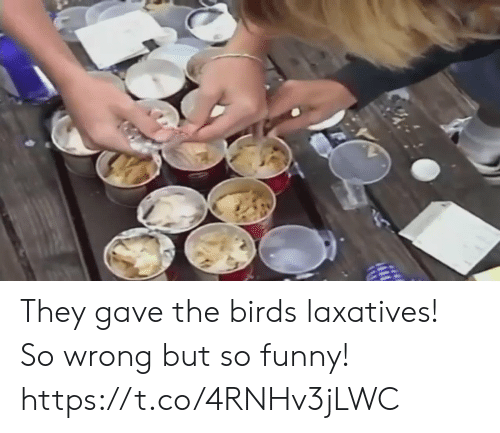 Funny, Birds, and The Birds: They gave the birds laxatives! So wrong but so funny!  https://t.co/4RNHv3jLWC