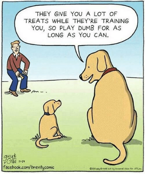 Dank, Dumb, and Facebook: THEY GIVE YOU A LOT OF  TREATS WHILE THEY RE TRAINING  YOU, SO PLAY DUMB FOR AS  LONG AS YOu CAN.  Je  facebook.com/brevitycomic  11-29
