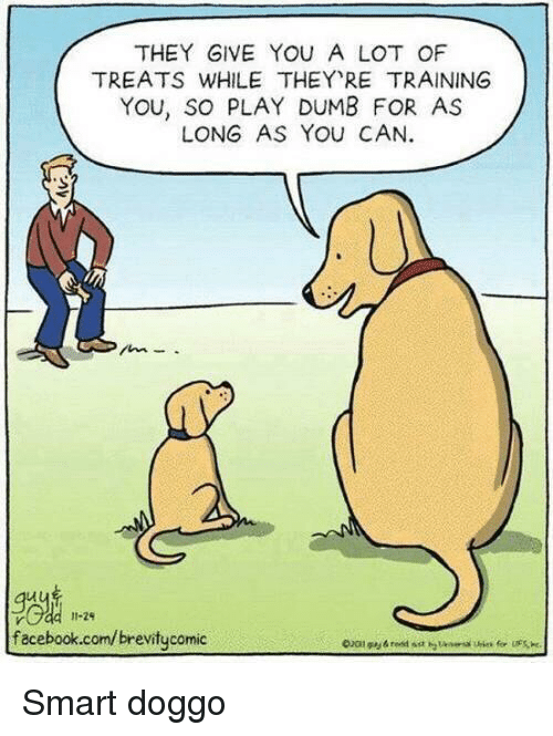 Dumb, Facebook, and facebook.com: THEY GIVE YOU A LOT OF  TREATS WHILE THEY RE TRAINING  YOU, SO PLAY DUMB FOR AS  LONG AS YOu CAN.  Je  facebook.com/brevitycomic  11-29 Smart doggo
