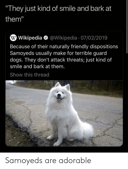 "Dogs, Wikipedia, and Smile: They just kind of smile and bark at  them""  W Wikipedia @Wikipedia 07/02/2019  Because of their naturally friendly dispositions  Samoyeds usually make for terrible guard  dogs. They don't attack threats; just kind of  smile and bark at them.  Show this thread Samoyeds are adorable"
