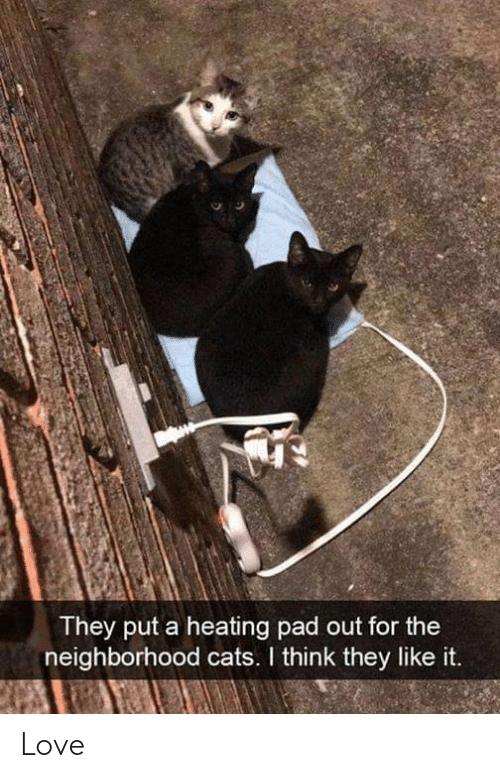 pad: They put a heating pad out for the  neighborhood cats. I think they like it. Love