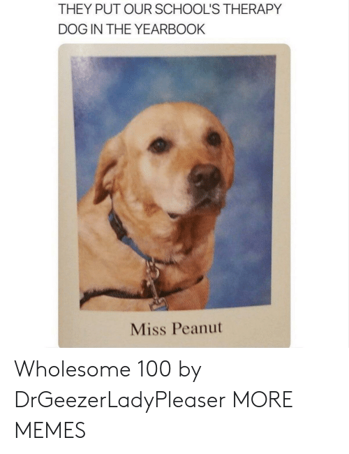 Dank, Memes, and Target: THEY PUT OUR SCHOOL'S THERAPY  DOG IN THE YEARBOOK  Miss Peanut Wholesome 100 by DrGeezerLadyPleaser MORE MEMES