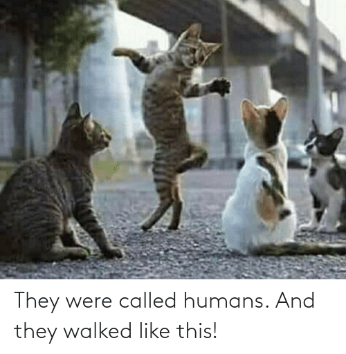 humans: They were called humans. And they walked like this!