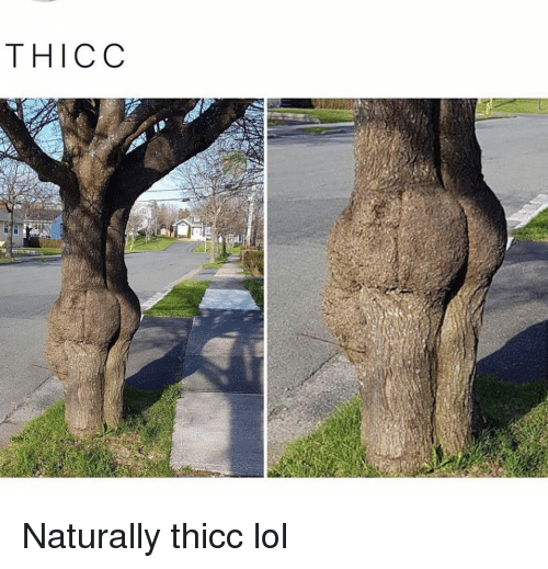 Funny, Lol, and Thicc: THICC Naturally thicc lol