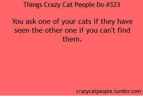 Crazy Cat People: Things Crazy Cat People Do #323  You ask one of your cats if they have  seen the other one if you can't find  them  crazycatpeople.tumblr.com