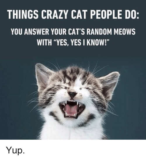 """Crazy Cat People: THINGS CRAZY CAT PEOPLE DO:  YOU ANSWER YOUR CAT'S RANDOM MEOWS  WITH """"YES, YES I KNOW!"""" Yup."""