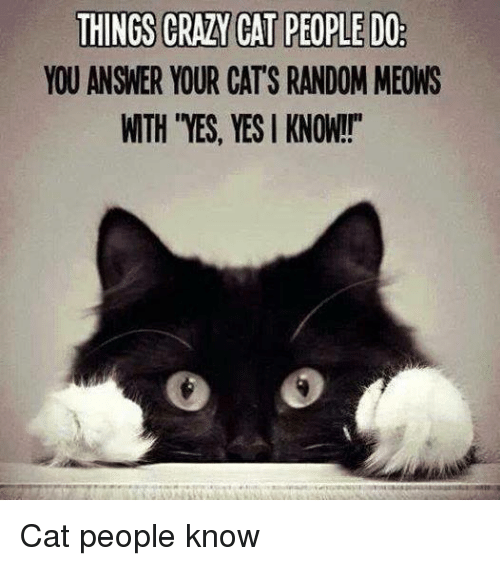 Crazy Cat People: THINGS CRAZY CAT PEOPLE DO  YOU ANSWER YOUR CATS RANDOM MEOWS  WTH YES, YES KNOW! Cat people know