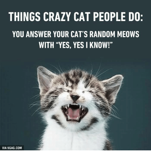 "Crazy Cat People: THINGS CRAZY CAT PEOPLE DO:  YOU ANSWER YOUR CAT'S RANDOM MEOWS  WITH ""YES, YES I KNOW!""  VIA 9GAG.COM"