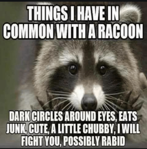 Will Fight: THINGS I HAVE IN  COMMON WITH A RACOON  DARK CIRCLES AROUND EYES, EATS  JUNK, CUTE, A LITTLE CHUBBY, I WILL  FIGHT YOU, POSSIBLY RABID