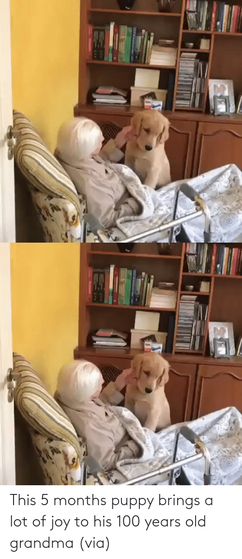 joy: This 5 months puppy brings a lot of joy to his 100 years old grandma (via)