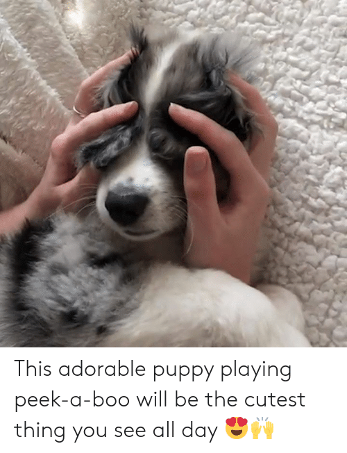 Boo, Puppy, and Adorable: This adorable puppy playing peek-a-boo will be the cutest thing you see all day 😍🙌