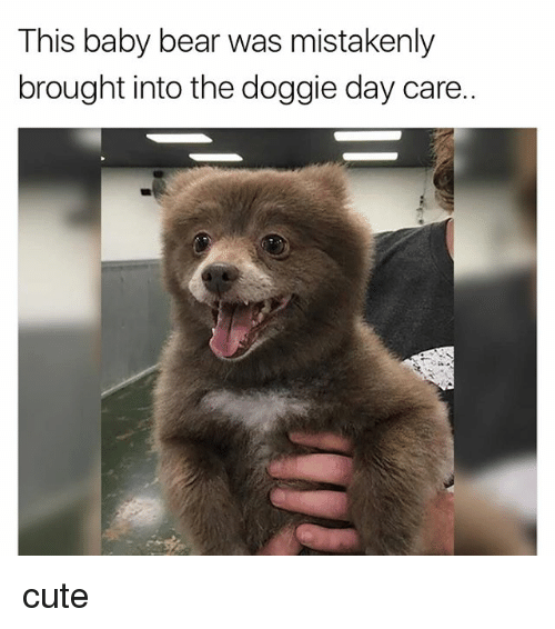 baby bear: This baby bear was mistakenly  brought into the doggie day care.. cute