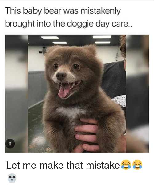 baby bear: This baby bear was mistakenly  brought into the doggie day care. Let me make that mistake😂😂💀