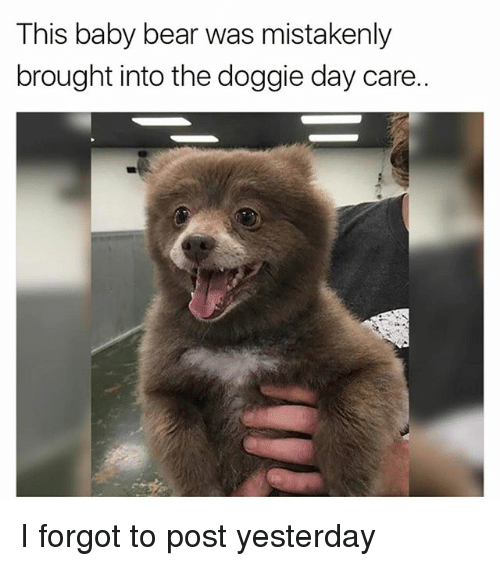 baby bear: This baby bear was mistakenly  brought into the doggie day care. I forgot to post yesterday