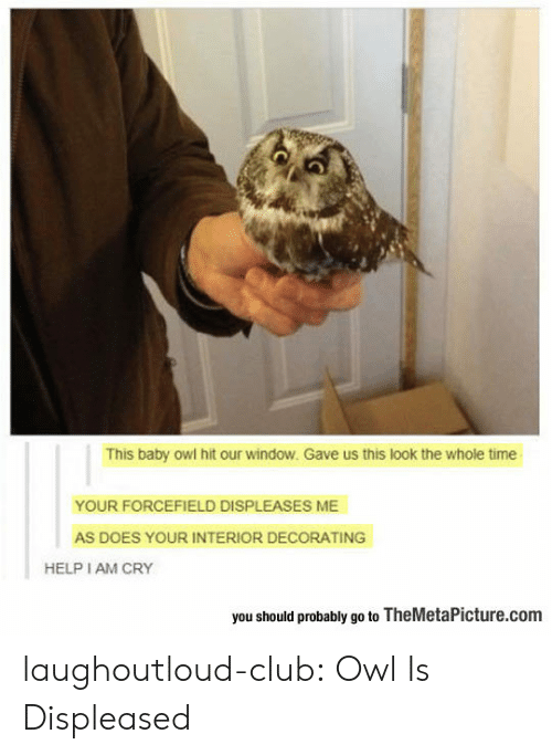 Whole Time: This baby owl hit our window. Gave us this look the whole time  YOUR FORCEFIELD DISPLEASES ME  AS DOES YOUR INTERIOR DECORATING  HELP I AM CRY  you should probably go to TheMetaPicture.com laughoutloud-club:  Owl Is Displeased