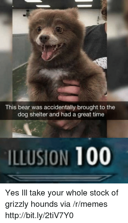 Anaconda, Memes, and Bear: This bear was accidentally brought to the  dog shelter and had a great time  ILLUSION 100 Yes Ill take your whole stock of grizzly hounds via /r/memes http://bit.ly/2tiV7Y0