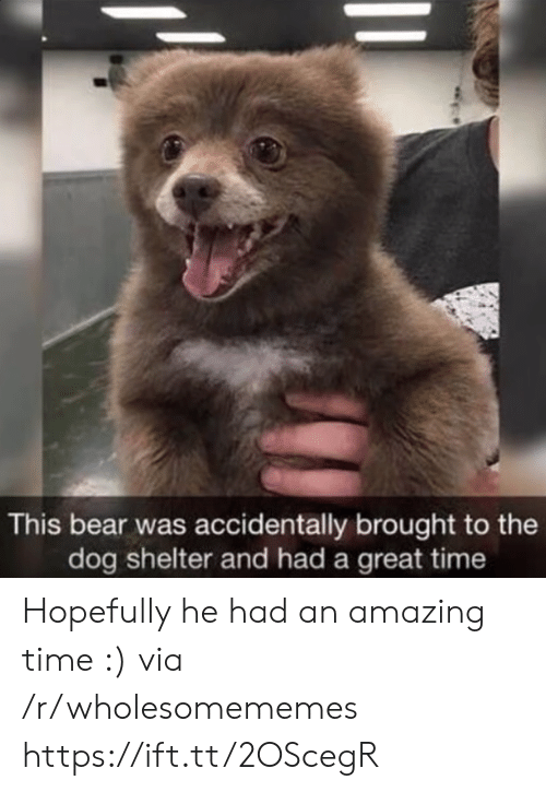 Bear, Time, and Amazing: This bear was accidentally brought to the  dog shelter and had a great time Hopefully he had an amazing time :) via /r/wholesomememes https://ift.tt/2OScegR