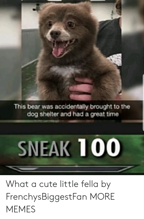 Cute Little: This bear was accidentally brought to the  dog shelter and had a great time  SNEAK 100 What a cute little fella by FrenchysBiggestFan MORE MEMES