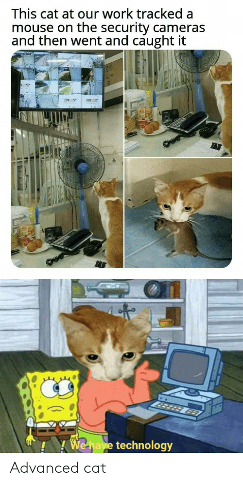Work, Mouse, and Technology: This cat at our work tracked a  mouse on the security cameras  and then went and caught it  50  3er  MEWAR  963  We have technology Advanced cat