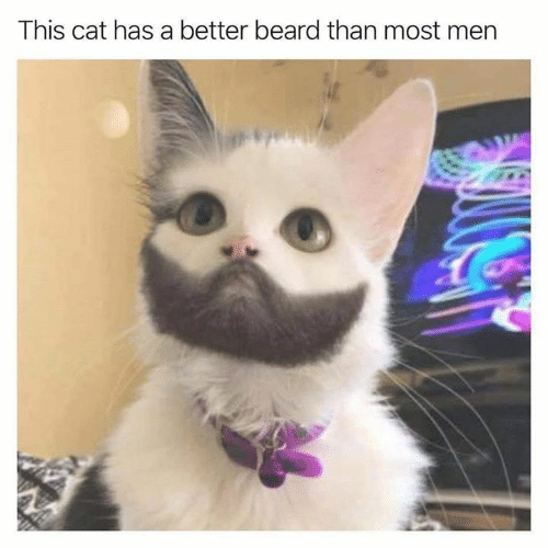 Beard, Memes, and 🤖: This cat has a better beard than most mern