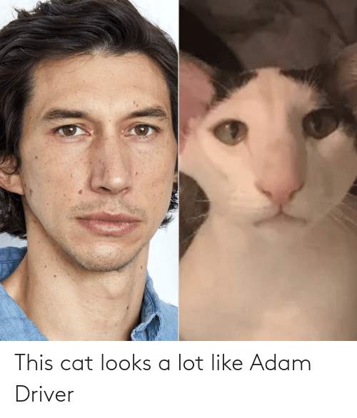 Looks: This cat looks a lot like Adam Driver