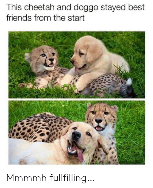 Cheetah: This cheetah and doggo stayed best  friends from the start Mmmmh fullfilling…