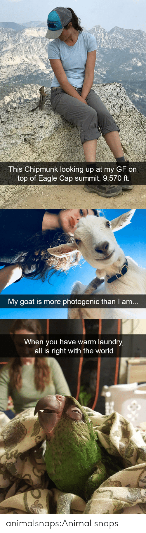 summit: This Chipmunk looking up at my GF on  top of Eagle Cap summit, 9,570 ft.   My goat is more photogenic than I am..   When you have warm laundry,  all is right with the world animalsnaps:Animal snaps