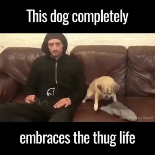 Thugs Life: This dog completely  embraces the thug life