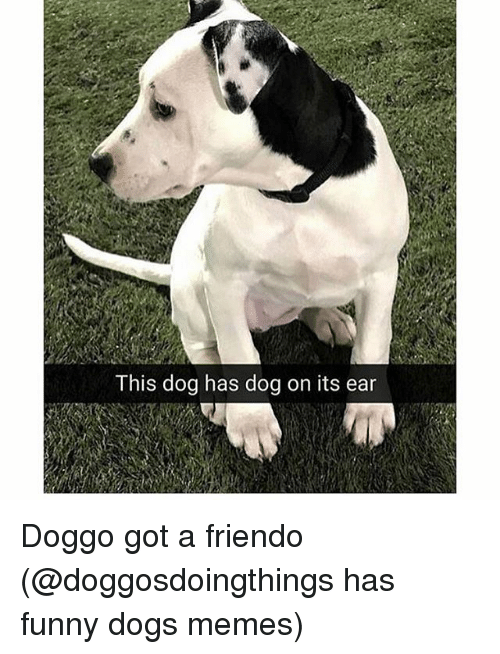 Dogs, Funny, and Memes: This dog has dog on its ear Doggo got a friendo (@doggosdoingthings has funny dogs memes)